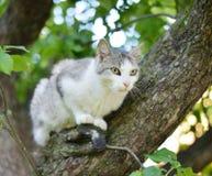 Cat on a tree. Stock Photos