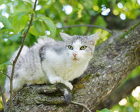 Cat on a tree. Royalty Free Stock Photography