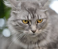 Cat on a tree. Stock Images