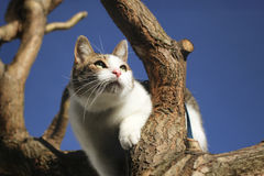Cat on tree. A cat sitting on the branch observing the sky and waiting for a bird to hunt Stock Photos