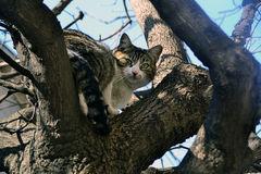 The cat on the tree Stock Photo
