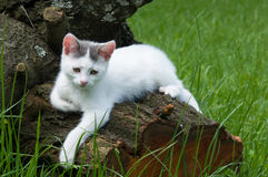 Cat on a tree Stock Photos
