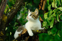 Cat in a tree in summer Royalty Free Stock Photography