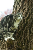 Cat in tree Stock Photo