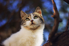 Cat on the tree Stock Images