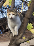 Cat on tree Royalty Free Stock Photos