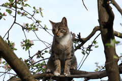 Cat on the tree Stock Photography