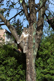 Cat on the tree Royalty Free Stock Image