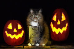 Cat with Trick or Treat Bag. A brown tabby cat with green eyes and mischievious expression holding brown paper bag printed with Trick or Treat. Two glowing Jack stock photos