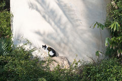 Cat in tropical frame. Cat sitting on a rock in tropical frame Royalty Free Stock Photos