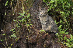 Cat on a trunk. A cat sitting on a huge trunk Stock Images