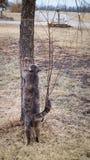 Cat try to climb the tree Stock Photos
