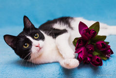 Cat with tulips. Elegant black and white cat with a bouquet of tulips Stock Image
