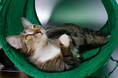 Cat in the tunnel Stock Photography
