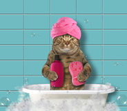 Cat in turban 2 Royalty Free Stock Images