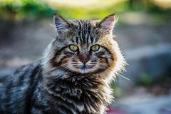 Cat. A Turkish cat not far from Istanbul city Royalty Free Stock Photos