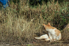 Cat turn back Royalty Free Stock Photography