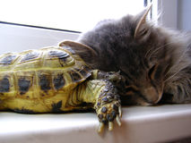 Cat&turtle royalty free stock photography