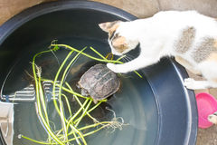 Cat and Turtle Royalty Free Stock Photos