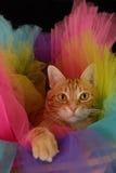 Cat Tutu Foto de archivo