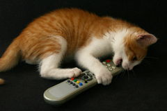 Cat with tv remote control Royalty Free Stock Image