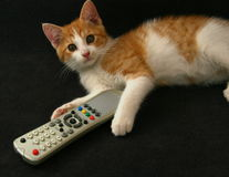 Cat with tv remote control Stock Images