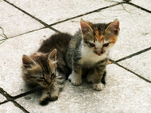 Cat twins. Very young cat twins waiting for mother Stock Photography