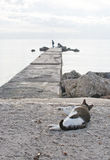 Cat and two men fishing. PALMA DE MALLORCA, BALEARIC ISLANDS, SPAIN - DECEMBER 1, 2016: Cat watches two men fishing from a pier on a sunny winter day on December Stock Images