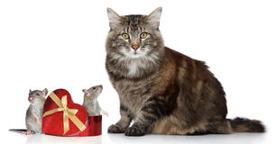 Cat and two mices, valentine day gift Royalty Free Stock Photos