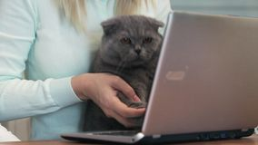 Cat is typing text on a laptop.  stock footage