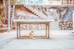 Cat uder table. Alone royalty free stock photography