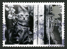 Cat UK Postage Stamp. GREAT BRITAIN - CIRCA 2001: A used postage stamp from the UK, depicting an image of a pet Cat looking out of a window, circa 2001 Royalty Free Stock Photography