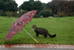 Cat with umbrella Stock Image