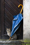 Cat and umbrella. Cat sat under closed umbrella leaning against building outdoors Royalty Free Stock Photo