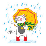 Cat with umbrella under the rain Royalty Free Stock Images