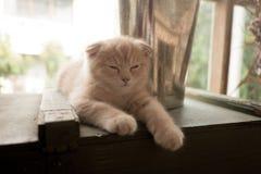 Cat On un il giorno luminoso Fotografia Stock Libera da Diritti