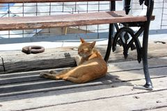 Cat under bench at summer day. Sleeping ginger cat in shadow of bench stock images