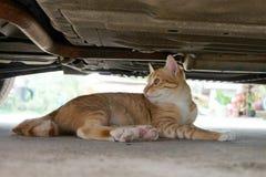 Cat under car Stock Photos