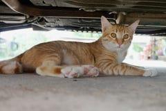 Cat under car Stock Images