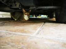 The cat is under the car in the garage, Relax and calm down pet. The cat is under the car in the garage, Relax and calm down pet stock photography
