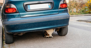 Cat under car hiding. Cat hiding under car parked on a street Royalty Free Stock Photography