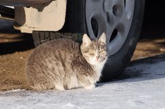 Cat under the car Stock Image