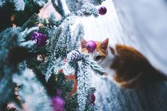 Cat under the Christmas Tree Stock Photos