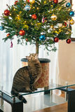 The cat under the Christmas tree. Small tree in a pot in the apa. Rtment is on the glass coffee table Stock Photography