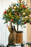 The cat under the Christmas tree. Small tree in a pot in the apa Royalty Free Stock Photography