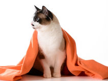 Cat under cover Stock Photos