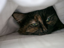 Cat under the covers. A cat snuggled up under a white doona Stock Image