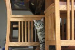 Cat Under een Lijst Stock Foto