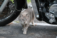 Cat under motorcycle Stock Photography