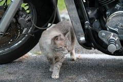 Cat under motorcycle Stock Photos